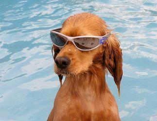 pools bill dog
